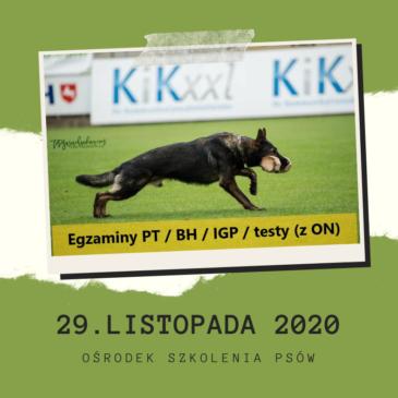 Egzaminy PT / BH / IGP / testy psychiczne (z ON) 29.11.2020