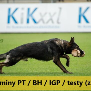Egzaminy PT / BH / IGP / testy psychiczne (z ON) 13.03.2021